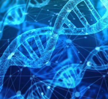 hybrid DNA